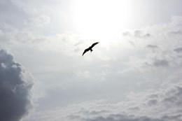 Я стала свободнее, мне стало свободнее дышать